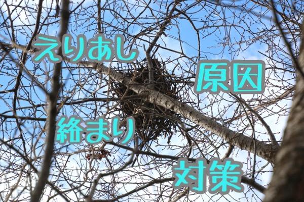 【脱・鳥の巣】えりあしの絡まる原因と対処法
